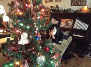 Bella Christmas tree 1