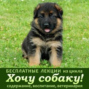 sobaki_leccii3b.jpg
