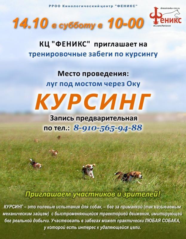 kursing_ryazan_14_10_17_fenix.jpg