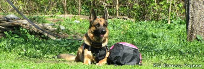 дрессировка обучение собак в Рязани
