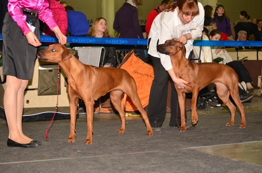 Породы собак с фото полный список пород описаний и