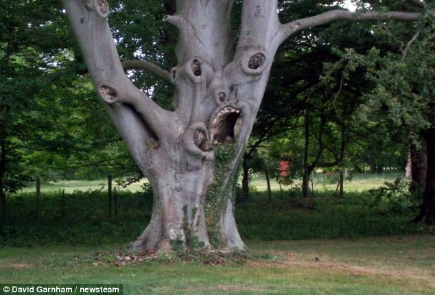 Scariest Tree In The World