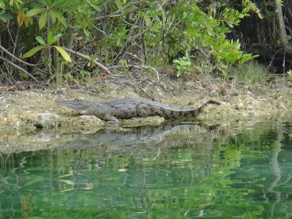 Крокодилы живут прямо на территории гостиницы