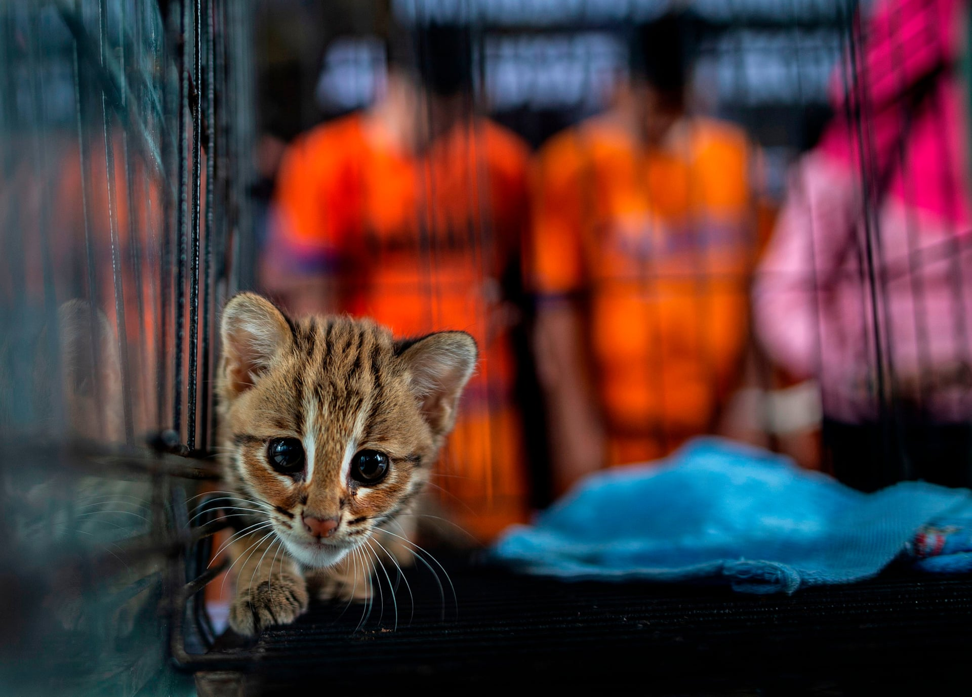 Juni Kriswanto/Getty Images/Scanpix