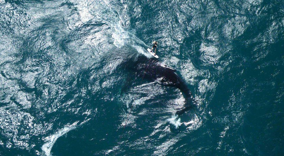 Bu inanılmaz fotoğraftada görüldüğü gibi devasa bir balina.