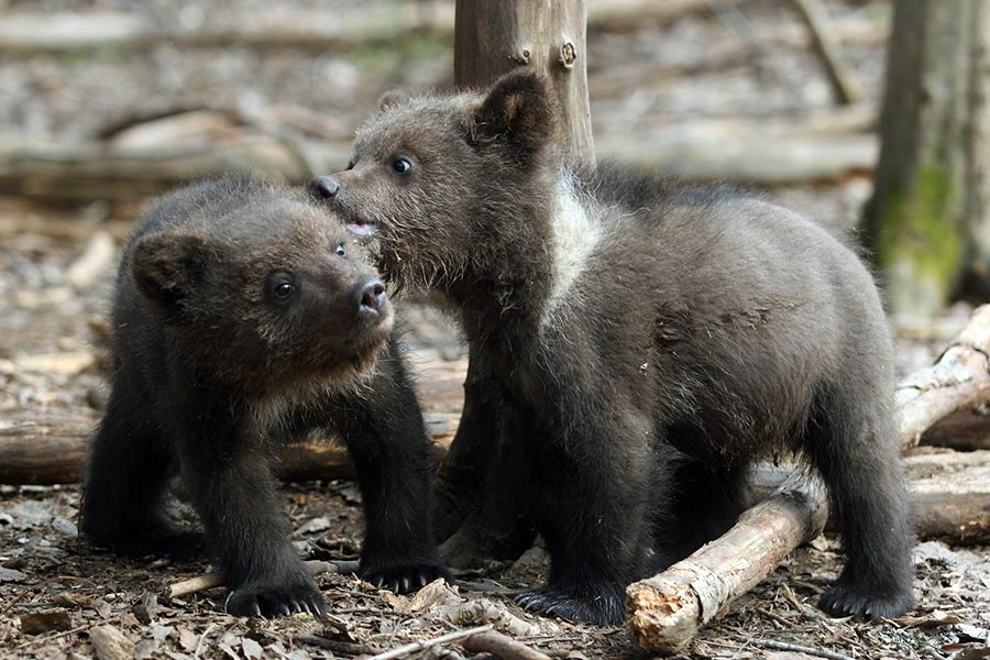 Дети и медведи 46