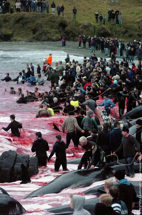 Море крови