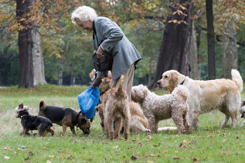 По собачьи с бабкой фото 447-221