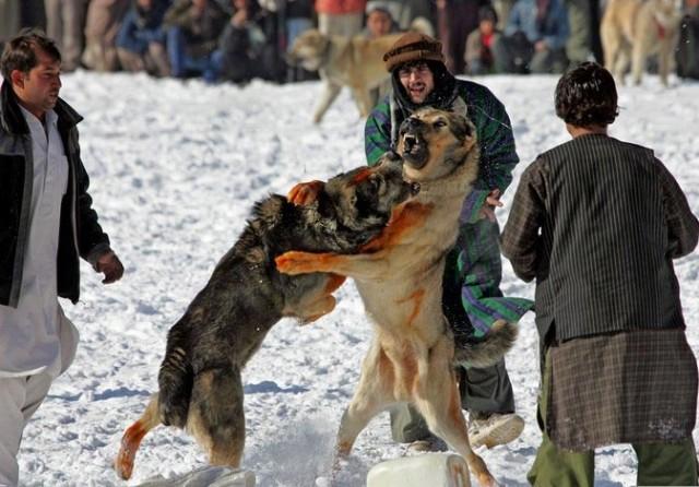 http://pics.livejournal.com/drugoi/pic/0019yfxr/s640x480