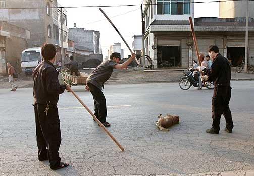 В Китае Едят Собак