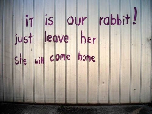 it is our rabbit!