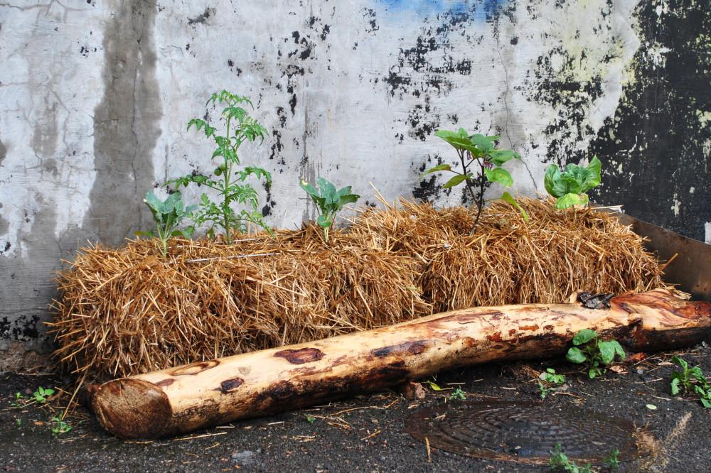 Грядка из соломенных тюков с рассадой лето 2013