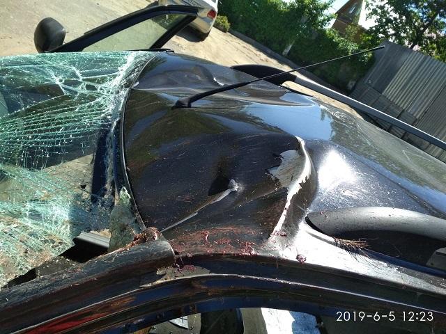 Народная примета: лось на дороге - машина в тотал!