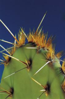 MFA Site, cactus, web ethics