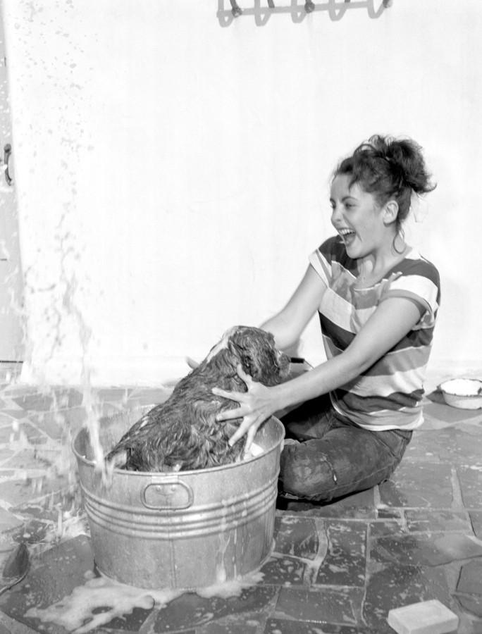 026 Юная Элизабет Тейлор купает собаку