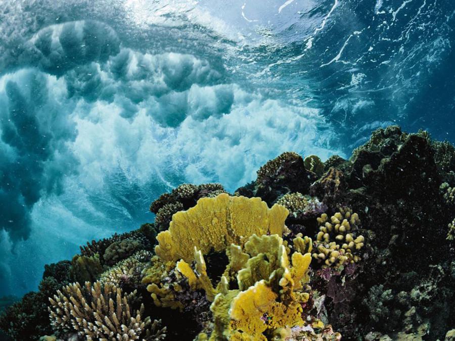 Рифы в водах Саудовской Аравии – одна из самых нетронутых человеком экосистем Красного моря