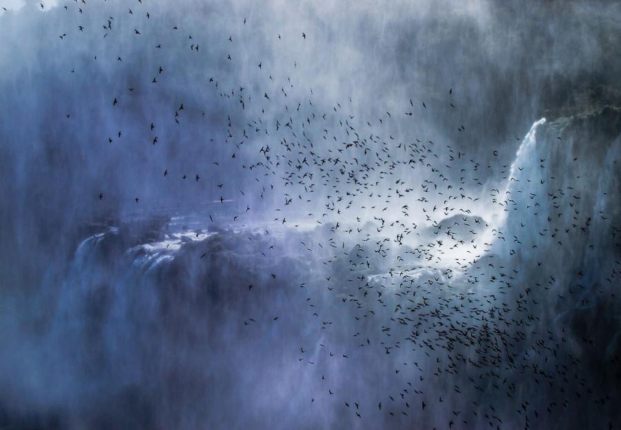 Восхитительный водопад Игуасу. Полет этой стаи стрижей – символ свободы, которая принадлежит этому фантастическому чуду природы