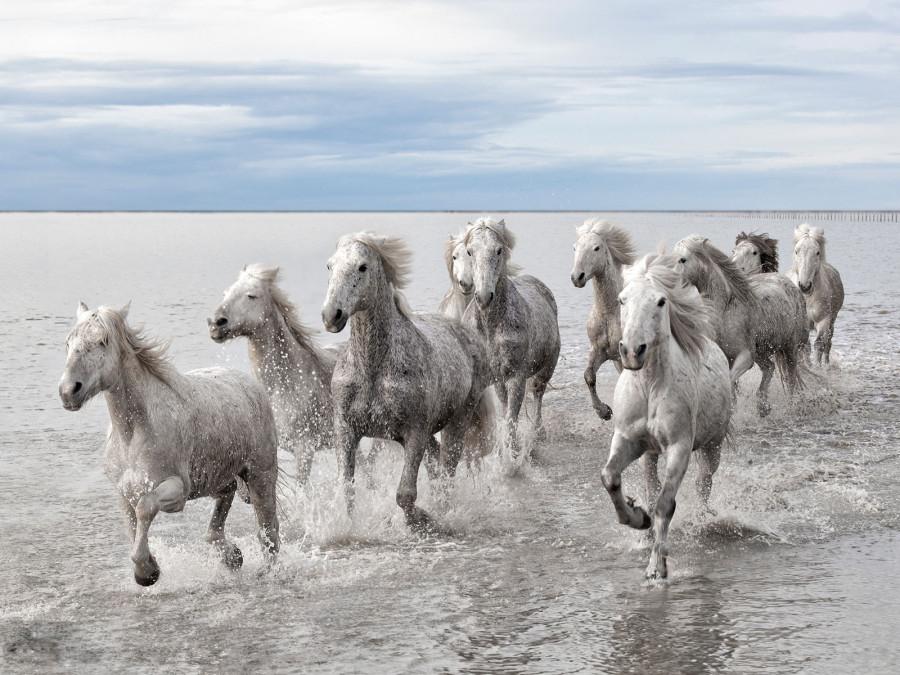 Дикие лошади, Франция