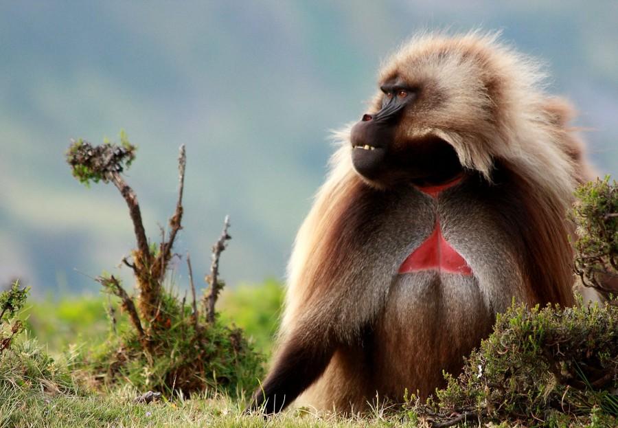 Национальный парк Горы Сымен, Эфиопия