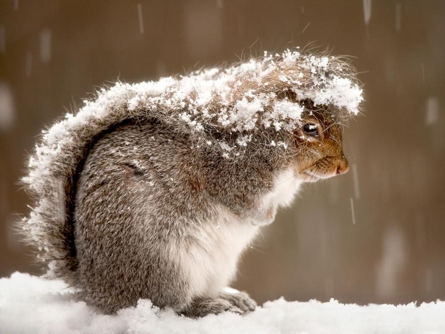 Фото сделано во время снегопада в Нью-Джерси