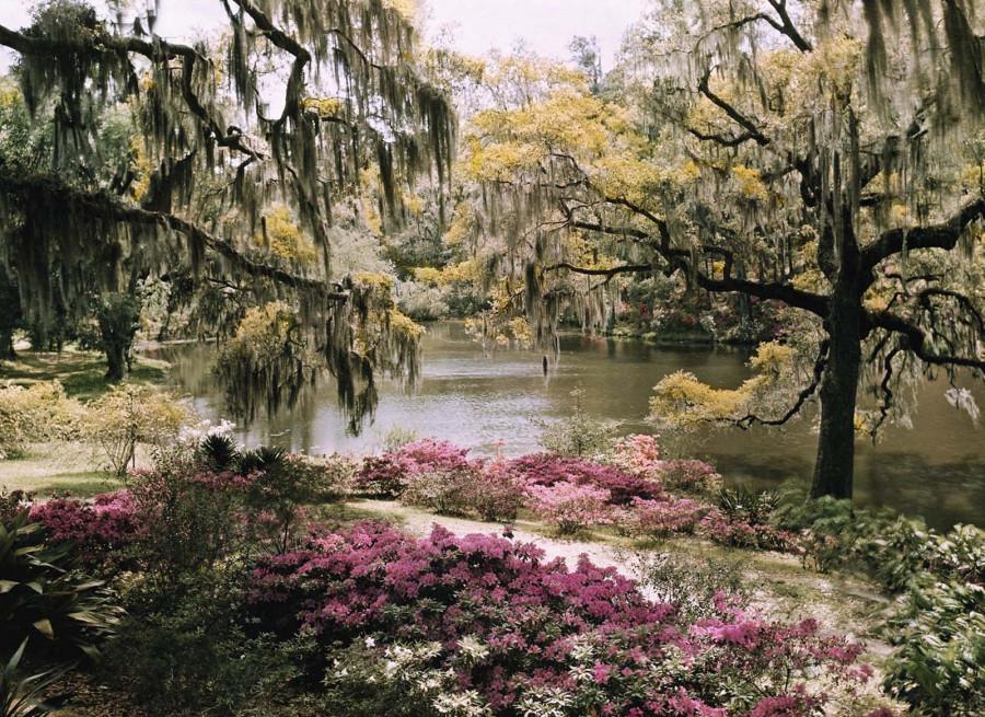 Яркий пейзаж в Чарльстоне, который называют домом самых старых ландшафтных садов в Америке