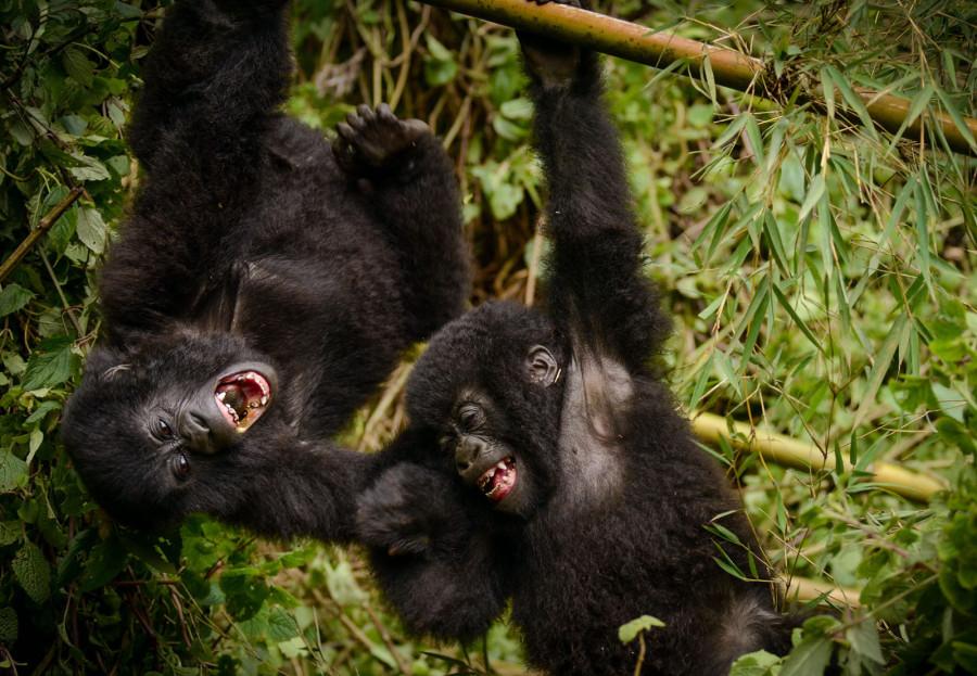 Национальный парк вулканов в Руанде