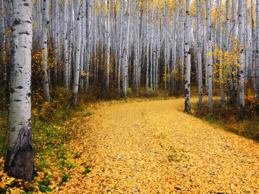 Опавшие осенние листья на дороге в лесах Колорадо