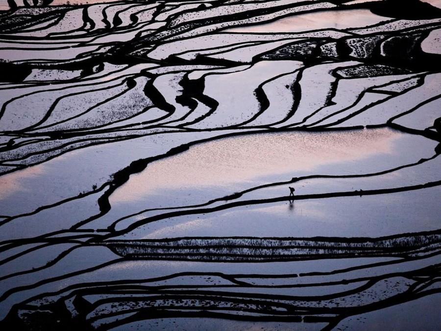 Рисовые поля, Китай. Одинокий крестьянин на рассвете идет по рисовому полю