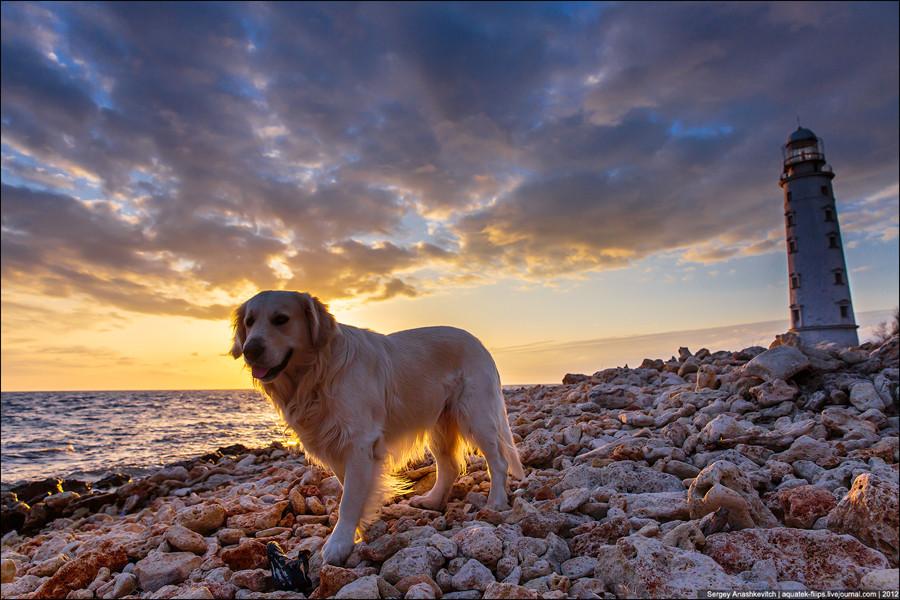 Закатный пес