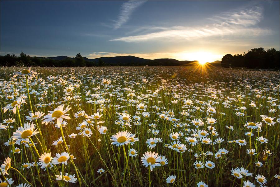 Рассвет над ромашковым полем, Байдарская долина, Крым