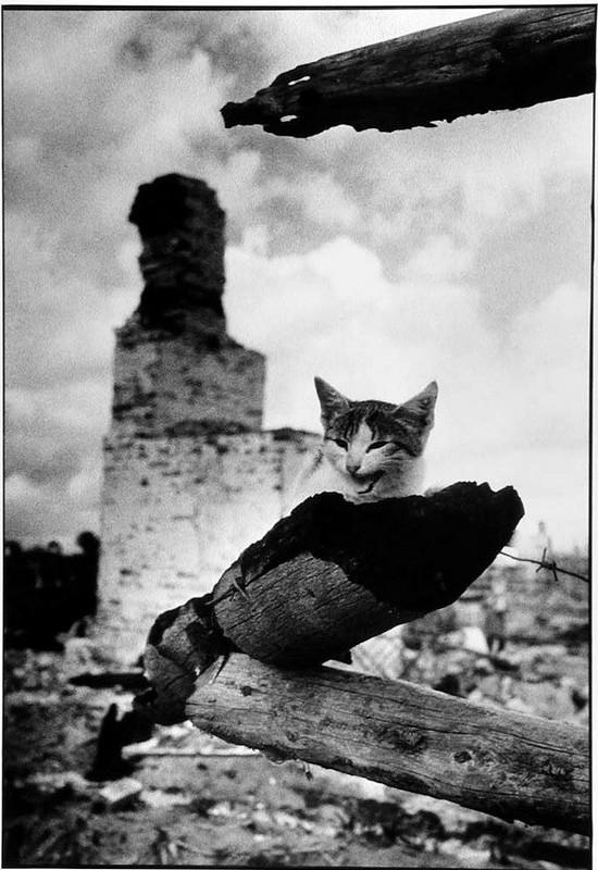 Михаил Савин. Смоленщина, 1943.jpg