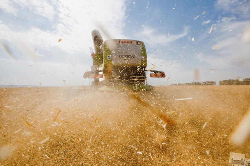 Уборка пшеницы. Автор Илья Варламов.jpg