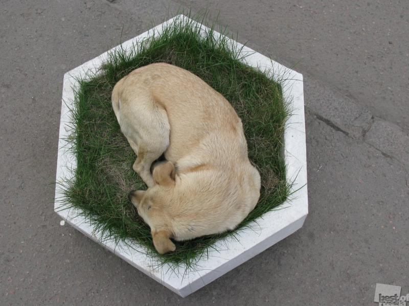 Собака-цветок. Автор Ольга Клейман.jpg