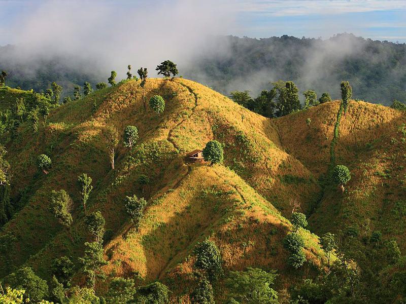 Бандарбан, Бангладеш. Золотые поля одной из холмистых областей Бангладеша