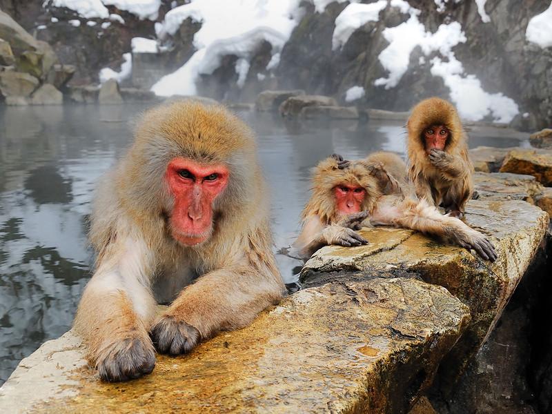 Макаки сидят в термическом водоеме в Японии. (Lucia Terui)
