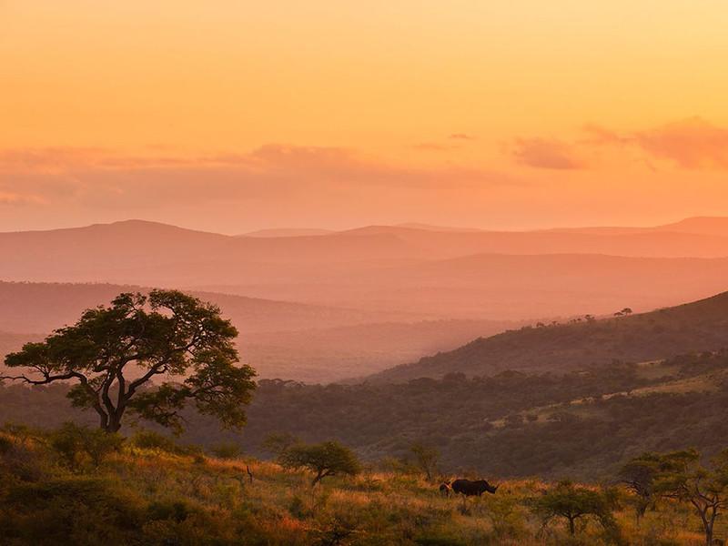 Носороги в Квазулу-Натал, ЮАР. (Brent Stirton, National Geographic)