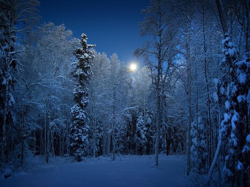 Я сделала это фото со своего заднего двора в Аляске. Был ранний вечер, и по небу плавно перемещалась полная луна, освещая морозный лес и придавая небу кобальтовый оттенок. (Susan Stevenson)
