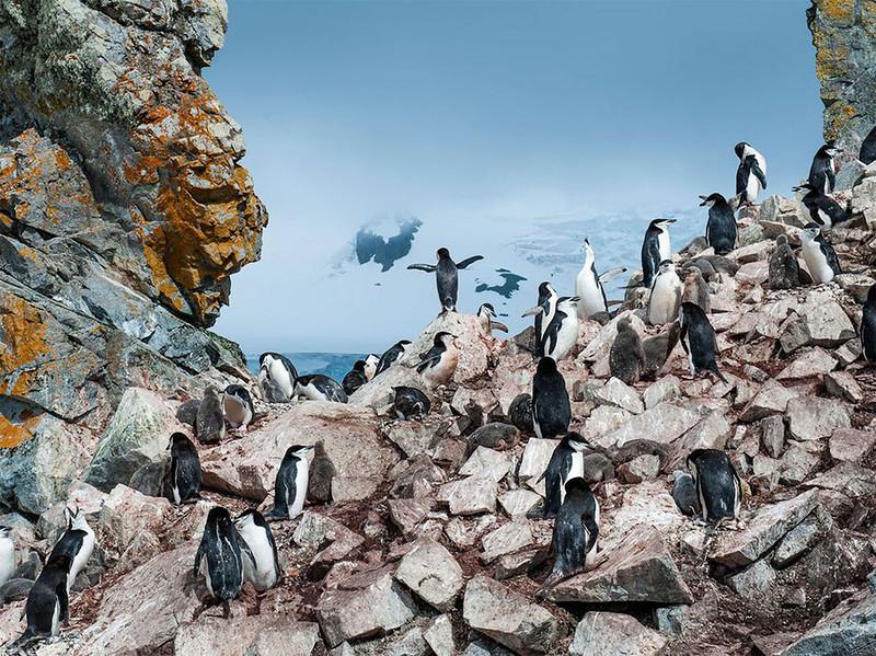 Пингвины на островке в Антарктиде. (Nancy Dowling)
