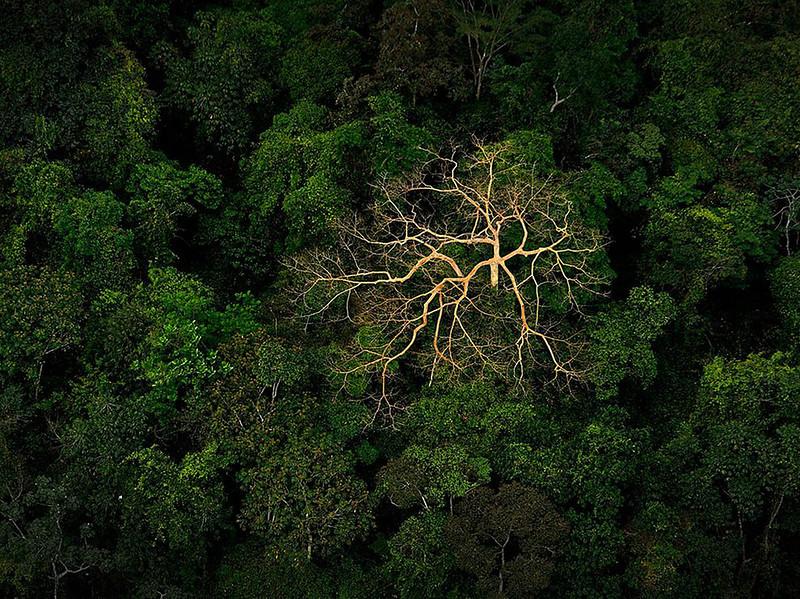 Мертвое дерево в джунглях тропического леса в Гондурасе. (Jeremy Lock)