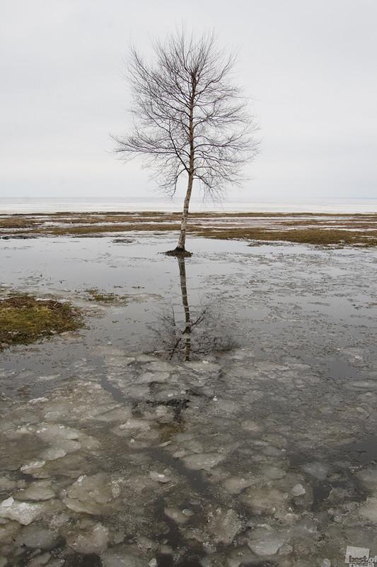 Одна весна. Автор Сергей Бровин-Гончаров.jpg