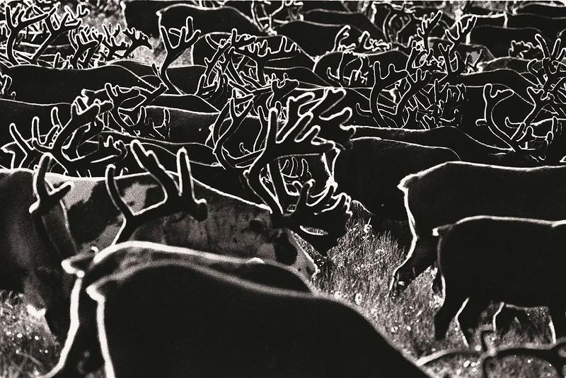 1 Александр Лыскин «Графика Чукотки». 1982 год.jpg
