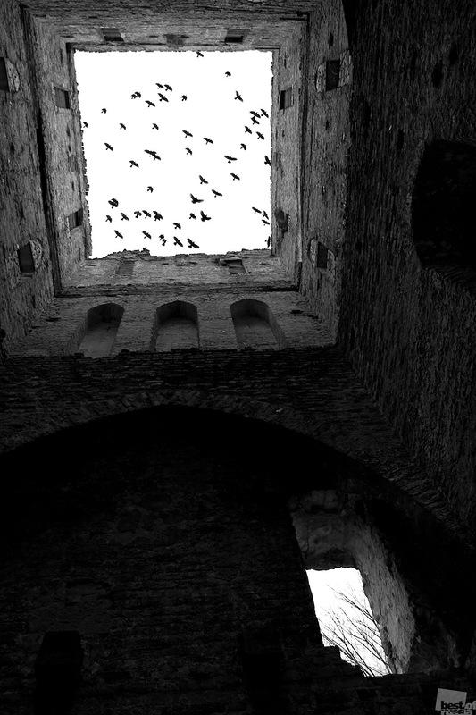 В шаге от забвения... Автор Виолетта Лядвик.jpg