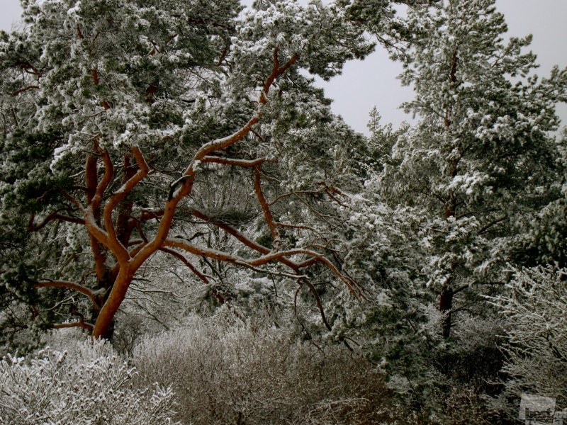 Зима,Зима.... Автор Ирина Белопольская.jpg