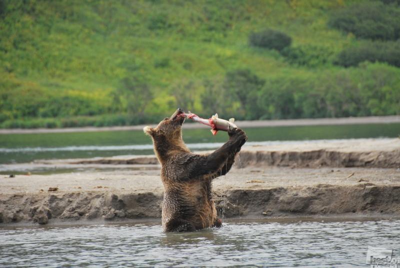 Хозяин нерестовой реки. Автор Оксана Лобанова.jpg