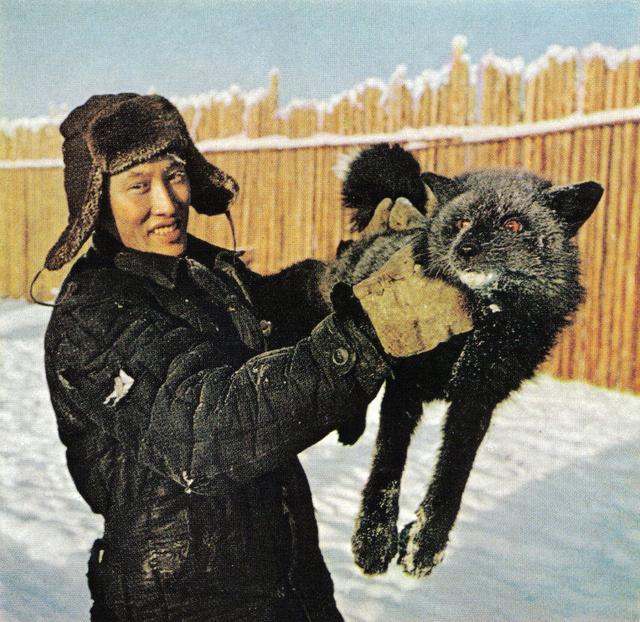 163 Чернобурая лисица на ферме в Оймяконе.jpg