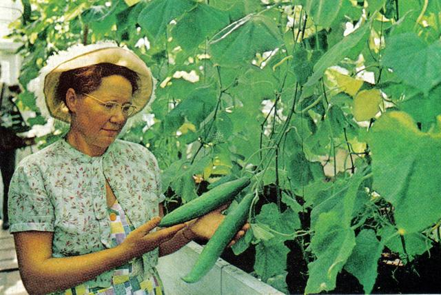 167 Экспериментальный участок Якутского Ботанического сада.jpg