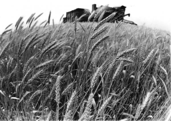 Урожай, 1960-е.jpg