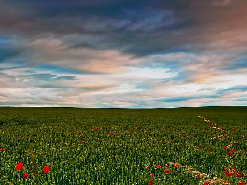 Поле на восточном побережье Шотландии сразу после восхода солнца как будто безгранично. (David Shields)