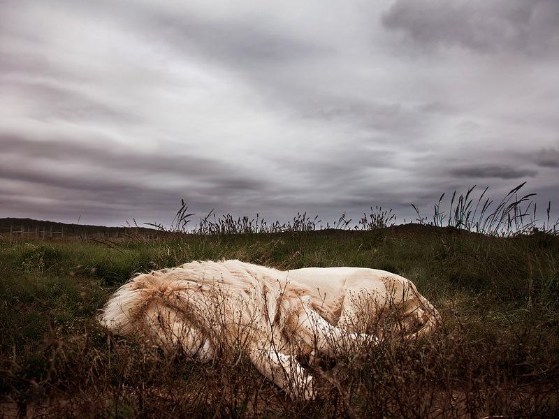 Самец льва отдыхает в мягкой траве в ЮАР. (Ande Truman)