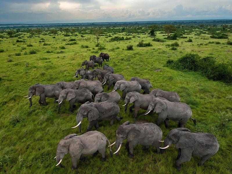 Слоны, Уганда. (Joel Sartore, National Geographic)